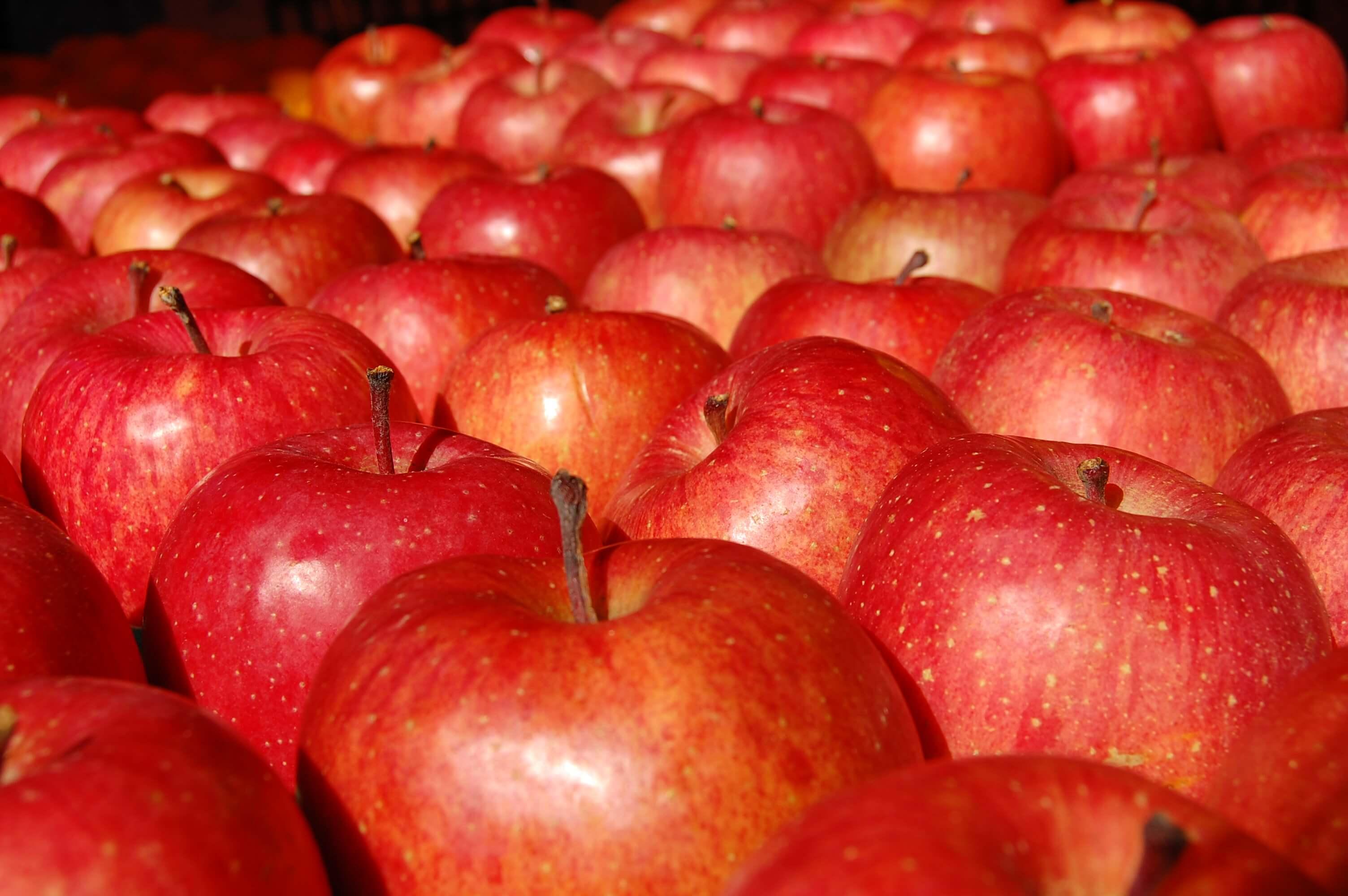 たくさんのリンゴ