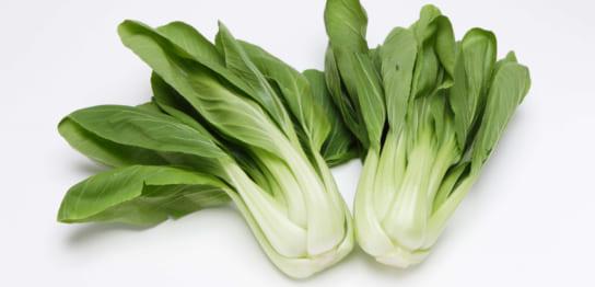 新鮮なチンゲン菜