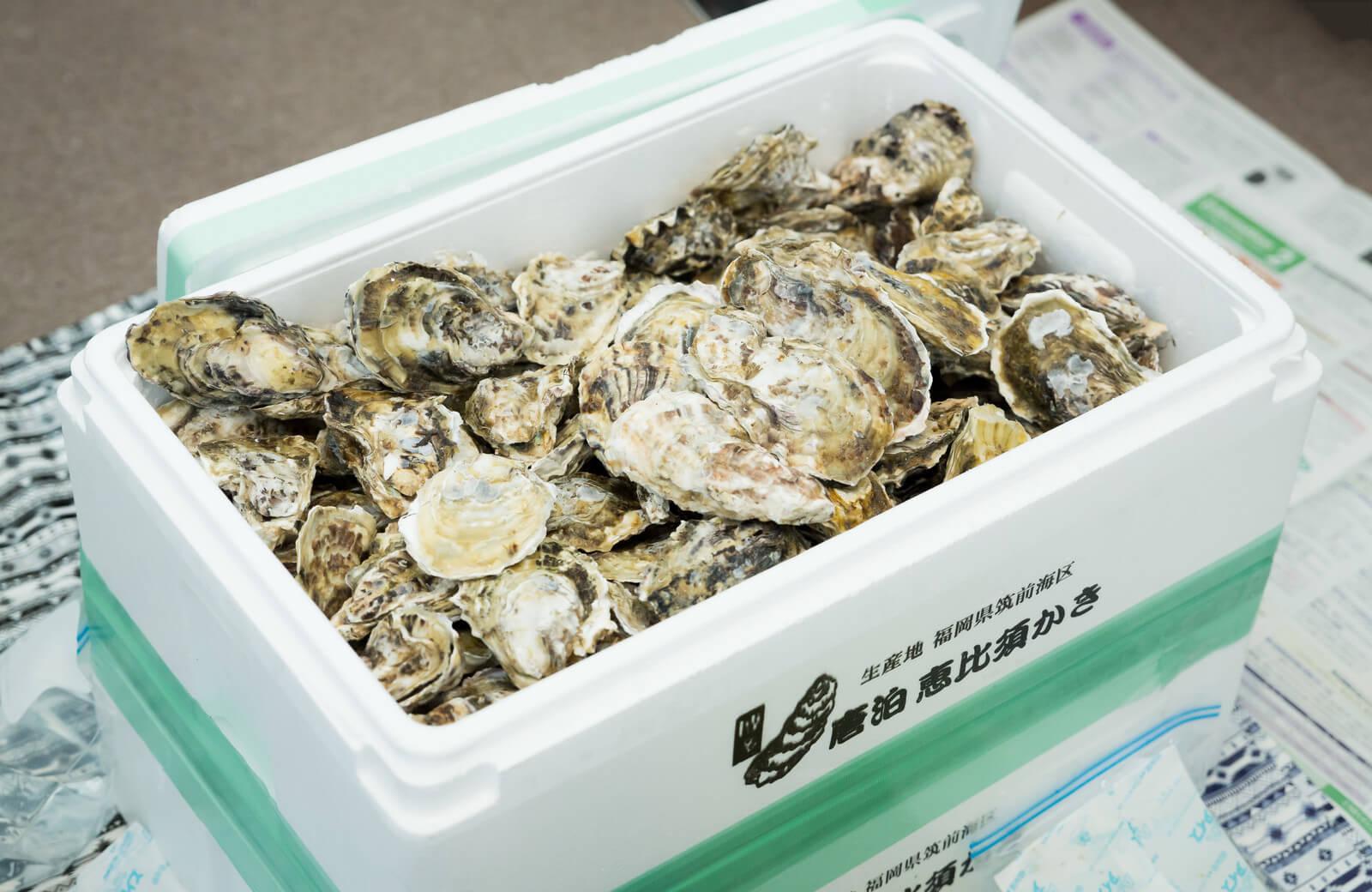発泡スチロールに入った大量の牡蠣